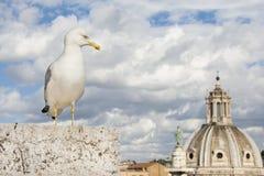 Gabbiano a Roma con le nuvole Fotografia Stock Libera da Diritti