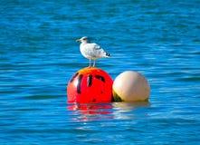 Gabbiano rosso della palla Fotografia Stock Libera da Diritti
