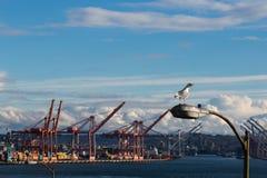 Gabbiano a Seattle Fotografia Stock