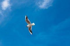 Gabbiano solo in un cielo blu Fotografie Stock Libere da Diritti