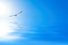 Gabbiano sopra il mare Immagini Stock Libere da Diritti