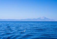 Gabbiano sopra il mare Fotografie Stock