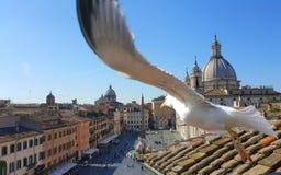 Gabbiano sopra la piazza Navona, Roma, Italia Fotografia Stock