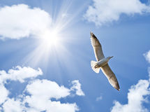 Gabbiano sotto il sole luminoso Fotografie Stock Libere da Diritti