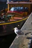 Gabbiano su Albert Dock a Liverpool Merseyside Inghilterra Fotografie Stock Libere da Diritti
