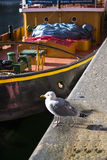 Gabbiano su Albert Dock a Liverpool Merseyside Inghilterra Fotografia Stock Libera da Diritti