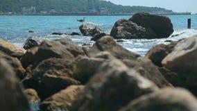 Gabbiano su roccia stock footage