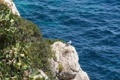 Gabbiano su una formazione rocciosa nel Mediterraneo fotografie stock