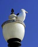 Gabbiano sul palo della lampada Fotografie Stock Libere da Diritti