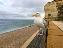Gabbiano sul recinto con il mare e le rocce Fotografie Stock