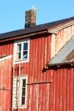 Gabbiano sul tetto Immagini Stock