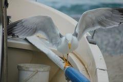 Gabbiano sulla barca con le ali aperte Fotografia Stock Libera da Diritti