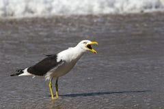 Gabbiano sulla spiaggia immagine stock