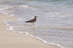 Gabbiano sulla spiaggia Immagini Stock