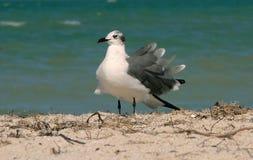 Gabbiano sulla spiaggia Fotografia Stock Libera da Diritti