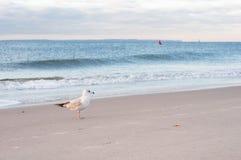 Gabbiano sulla spiaggia dell'oceano Immagine Stock