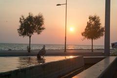 Gabbiano sulla vista di tramonto e dello stagno sul mare fotografia stock libera da diritti