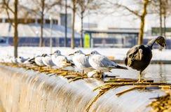 Gabbiano in una fila Fotografia Stock Libera da Diritti