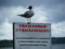 Gabbiano vicino al lago Naroch, Bielorussia Immagini Stock