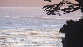 Gabbiano volante sul mare archivi video