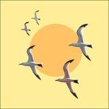 Gabbiano in volo contro il cielo Fotografia Stock Libera da Diritti
