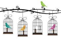 Gabbie di uccello Immagini Stock