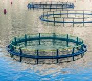 Gabbie per la piscicoltura Fotografie Stock Libere da Diritti