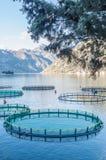 Gabbie per la piscicoltura Immagine Stock Libera da Diritti