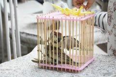 Gabbie per uccelli Fotografie Stock Libere da Diritti