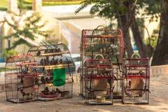 Gabbie per uccelli in pieno di piccoli uccelli da vendere nella tonalità Fotografie Stock