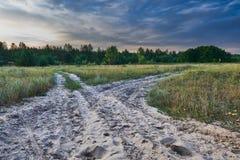 Gabel im Wald Lizenzfreies Stockfoto