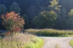 Gabeln Sie in einer Landstraße in der hügeligen Landschaft lizenzfreie stockfotos