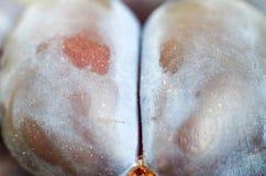 Gabelung der Pflaume Scheiben der Pflaume Abteilung in zwei Stockfoto