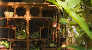 Gabinetti e piante di Sunlighted fotografia stock libera da diritti