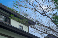Gable roof. And pointed trees Royalty Free Stock Photos