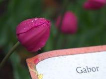 Gabor tulip Royalty Free Stock Photos