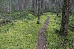 Gabriola Island Forest Trail Stock Photo