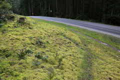 Gabriola Island Roadside Path Royalty Free Stock Images