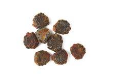 Gac fruit seed Stock Image