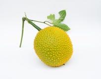 Gac frukt Arkivfoton