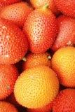 Gac frukt i marknaden Arkivfoto