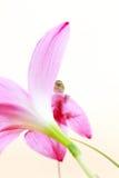 Gad na kwiacie Zdjęcia Royalty Free