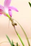 Gad na kwiacie Zdjęcia Stock