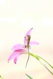Gad na kwiacie Zdjęcie Royalty Free
