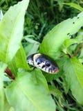 Gad trawy węża głowy zakończenie up zdjęcia stock