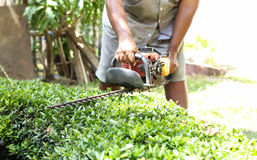Gadener cuts the hedge by the Hedge trimmer stock photography