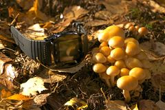 Gadget in nature,clock on nature royalty free stock photography