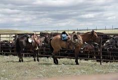 Gado de trabalho do rancho ocidental do cavalo do quarto da pele de gamo fotos de stock royalty free