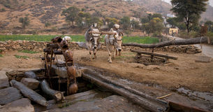 Gado e waterwheel Fotografia de Stock Royalty Free