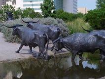 Gado longo de bronze do chifre Fotografia de Stock Royalty Free
